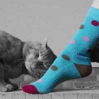 PITTCH spot Sock with Cat